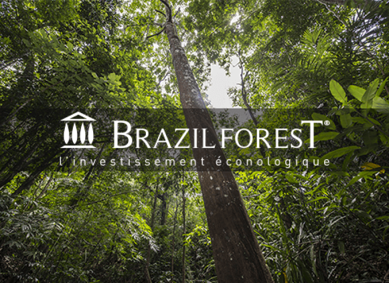 scenarii-brazilforest-foret-investissement-web-communication